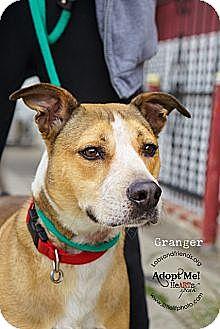 Cattle Dog Mix Dog for adoption in Burbank, California - Handsome Ranger