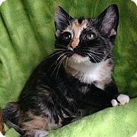 Adopt A Pet :: Calista - Union, KY
