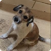 Adopt A Pet :: Winnie in Midland - San Antonio, TX