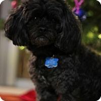 Adopt A Pet :: Bobby - Grafton, MA
