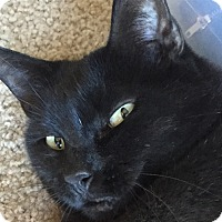 Adopt A Pet :: Nellie - Novato, CA