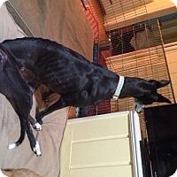Adopt A Pet :: Lana - Lexington, SC