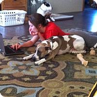 Adopt A Pet :: Taser - Phoenxville, PA