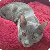 Adopt A Pet :: Miko - Herndon, VA