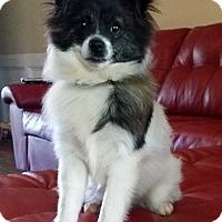 Adopt A Pet :: Lindy - Lawrenceville, GA