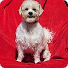 Adopt A Pet :: Gipper