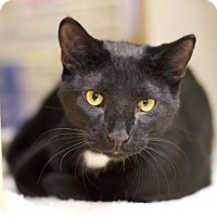 Adopt A Pet :: Radar - Sioux Falls, SD