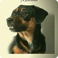 Adopt A Pet :: Montana - Lufkin, TX