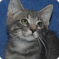 Adopt A Pet :: Kihei - Mesa, AZ