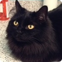 Adopt A Pet :: Boo - Toronto, ON
