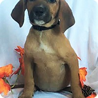 Adopt A Pet :: Penny - Mooresville, NC
