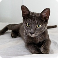 Adopt A Pet :: Eric - Oakland Park, FL