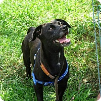 Chihuahua Dog for adoption in Freeport, New York - Greg