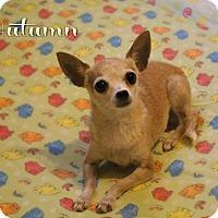 Adopt A Pet :: Autumn - Benton, LA
