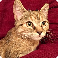 Adopt A Pet :: CaliCP - Carlisle, PA