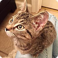 Adopt A Pet :: FionaCP - Carlisle, PA