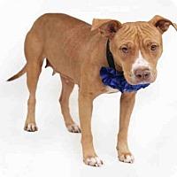 Adopt A Pet :: JADA - Orlando, FL