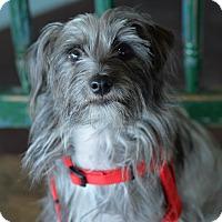 Adopt A Pet :: Opal - San Antonio, TX