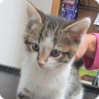 Adopt A Pet :: Denzil - Germantown, MD
