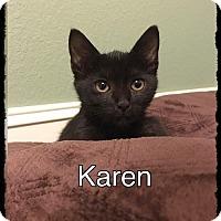 Adopt A Pet :: Karen - Brandon, FL