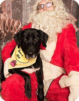 Labrador Retriever Mix Dog for adoption in Dallas, Texas - Rufus