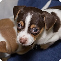 Adopt A Pet :: Lil Jon - Grand Rapids, MI
