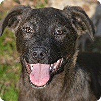 Adopt A Pet :: Raz - Glastonbury, CT