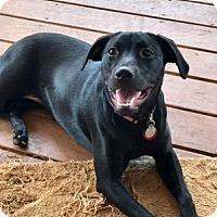 Adopt A Pet :: Delilah - Homewood, AL