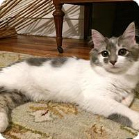 Adopt A Pet :: Philomena - Philadelphia, PA