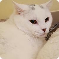 Adopt A Pet :: Duke - Salisbury, MA