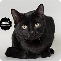 Adopt A Pet :: Mario - Wyandotte, MI
