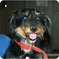 Adopt A Pet :: Snuffy - Glenpool, OK