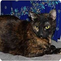 Adopt A Pet :: Queenie - Modesto, CA