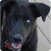 Adopt A Pet :: Emmett (Flagstaff) - Scottsdale, AZ