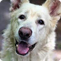 Adopt A Pet :: Kane - Tinton Falls, NJ