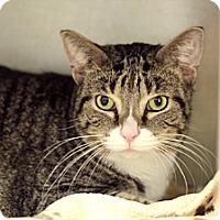 Adopt A Pet :: Nicholas Baby - Chicago, IL