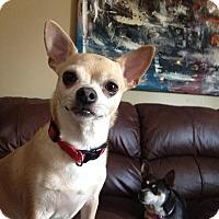 Adopt A Pet :: Meako - Edmonton, AB