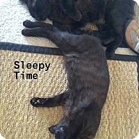 Adopt A Pet :: KittyBear & JellyBean - Los Angeles, CA