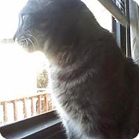 Adopt A Pet :: Giselle - Delmont, PA