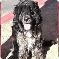 Adopt A Pet :: Naruto - Las Vegas, NV