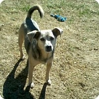 Adopt A Pet :: Dooby Blue - Homer, NY