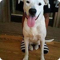 Adopt A Pet :: BELLA - Hurricane, UT
