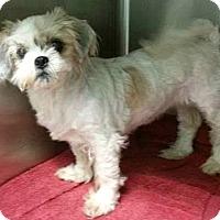 Adopt A Pet :: Polly-ADOPTION PENDING - Boulder, CO