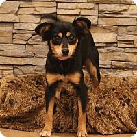 Adopt A Pet :: Winnie - Waldorf, MD