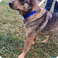 Adopt A Pet :: Lizzie - Kimberton, PA