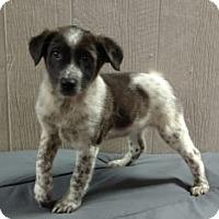 Adopt A Pet :: Kendall-pending adoption - Manchester, CT