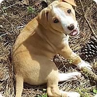 Adopt A Pet :: Tinker - Gainesville, FL