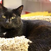 Adopt A Pet :: Marie - Sarasota, FL