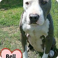 Adopt A Pet :: 378231 Bell - San Antonio, TX