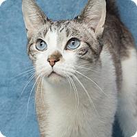 Adopt A Pet :: Sam - Elmwood Park, NJ